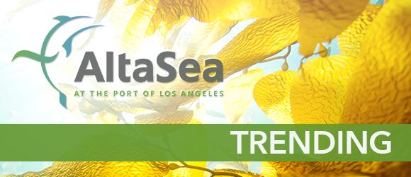 AltaSea: Trending Newsletter